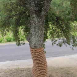 L'arbre Déton(n)ant 1