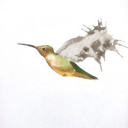 Les oiseaux. Planche n°8.